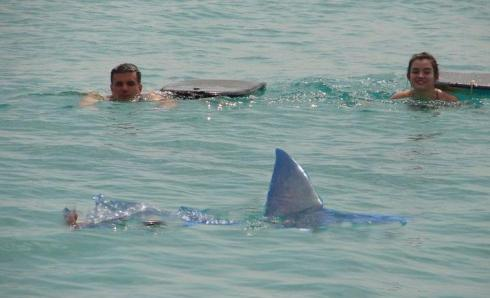 My nephew and his daughter encounter an unexpected swimming mate. Actually, it's Photoshopped.